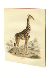 CAHIER PIQURES GIRAFE A5 48 PAGES